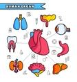 Human organ thin line concept set vector image