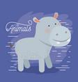 hippopotamus animal caricature in color background vector image