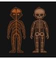 Human Body Anatomy Set Skeletonand Nervous vector image