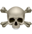 Human skull and crossbones vector image vector image