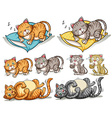 Cat in different actions vector image