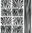 Zebra patterns vector image