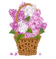lilac in basket vector image vector image