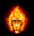 Redhead fire monkey vector image vector image