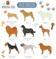 Dog breeds Working watching dog set icon Flat vector image