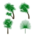 Set green palm tree isolated on white background vector image