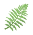 Prehistoric plant icon in cartoon style isolated vector image