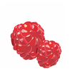 Fresh Realistic Raspberry vector image
