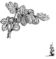 fig branch vector image