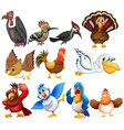 Bird collections vector image