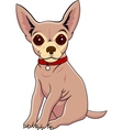 chihuahua cartoon vector image