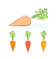 Carrot root vegetable on a white background vector image
