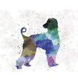 Afgan Hound 01 in watercolor vector image