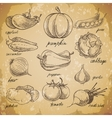 hand drawn vegetables vector image