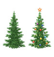 christmas spruce fir trees with ornaments vector image