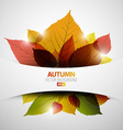 Autumn abstract background vector image