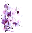 White card with orchid branch card with orchid vector image