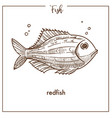 Redfish sketch fish icon of snapper or vector image