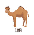 cute camel in flat style vector image