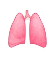 healthy human lungs vector image