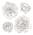 Set peony flowers isolated vector image