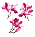 Set of red watercolor magnolia flowers vector image vector image