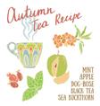Delicious autumn tea recipe vector image