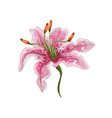 realistic tender watercolor like vivid pink vector image