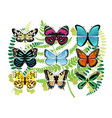 tropical butterflies spescies set vector image