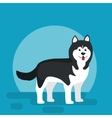 Isolated black and white young Husky dog vector image