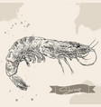 vintage shrimp drawing hand drawn vector image