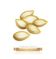 pumpkin seeds isolated on white background vector image vector image