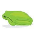 Frog vector image vector image