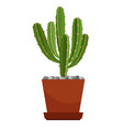 cactus in ceramic pot vector image