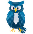 cute owl with blue feather vector image