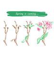 pple tree sketch design vector image