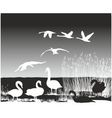 Swans on the river vector image vector image