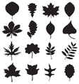 silhouettes of leaves vector image