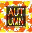 Autumn leaves background with black border vector image