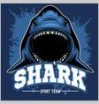 strong shark sports mascot vector image