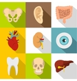Structure of body icons set flat style vector image