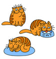 orange cats emoticons set isolated vector image