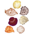 multicolored seashells vector image
