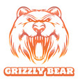 colorful grizzly bear sketch vector image