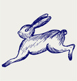 Running hare vector image vector image