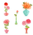 lovely collection modern vases with chrysanthemums vector image