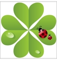 clover leaf with ladybird vector image