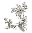 prickly pear cactus plants engraved hand drawn in vector image