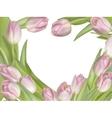 Tulip flowers on white background EPS 10 vector image