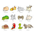 pet shop set types of pets vector image